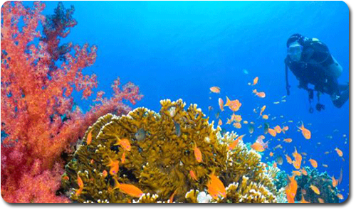 חופשה המשולבת עם ספורט ימי – אילת מול טבריה